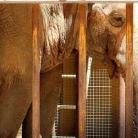 L'éléphant le plus triste du monde est décédé dans l'indifférence la plus totale...