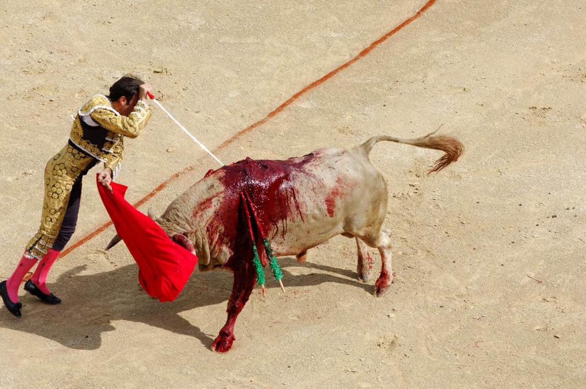 Vergeze: le taureau s'échappe pour survivre à la corrida mais se fait abattre par la gendarmerie à coup de feu