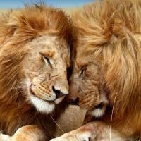 Un million d'espèces sont menacées d'extinction: l'alerte de l'ONU