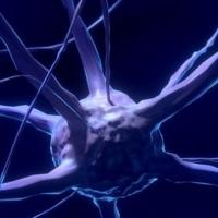 Science: création d'embryons mi-homme mi-animal