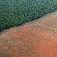 La forêt amazonienne toujours plus menacée par l'élevage