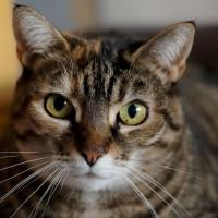 Vitry: des chats piégés à la glu!