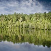 Ce cri terrifiant dans la forêt canadienne, défraie la chronique sur la toile